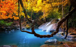 Amazing beauty of Asian nature. Tropical waterfall flows. Through dense jungle forest and falls into wild pond