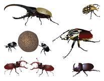 Amazing beetles Royalty Free Stock Photos