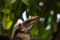 Amazing Bird. In Jerusalem Zoo Stock Photos