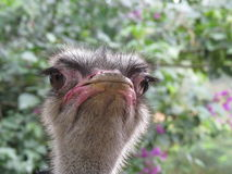 Amazing bird Royalty Free Stock Photos