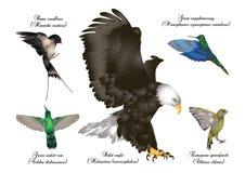 Amazing birds set - birds in flight Royalty Free Stock Image