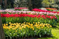 Beautiful Dutch flowers Stock Photo