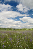 Amazing bluebell field with cloudy sky Royalty Free Stock Photo