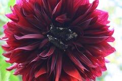 Amazing bordo flower with two citizens Stock Photos