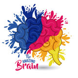 The amazing brain  Royalty Free Stock Photography