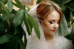 Amazing bride portrait with green leaves and sensual posing. ele Stock Image