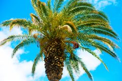 Amazing bright    tropical palm tree  and blue sky with white clouds. Amazing bright  tropical palm tree  and blue sky with white clouds on the background Stock Image