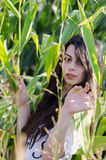 Amazing brunette lady with long curly hair, among corn field Stock Image