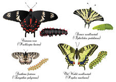 Amazing butterflies set - swallowtail Royalty Free Stock Photo