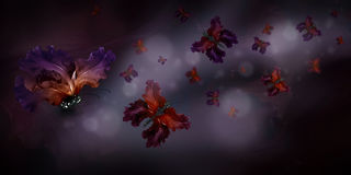 Amazing butterfly fairy of flowers Royalty Free Stock Photo