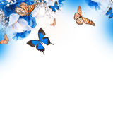 Amazing butterfly fairy. Of flowers, hydrangeas and iris Stock Photo