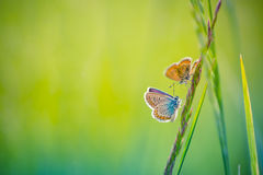 Amazing butterfly meadow landscape against bokeh background Royalty Free Stock Photography
