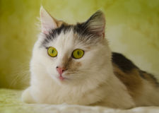 Amazing Cat eyes Stock Photo