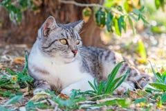 Amazing Cat Royalty Free Stock Photography