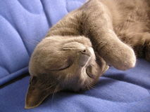 Amazing cat sleep Royalty Free Stock Images