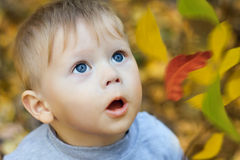 Amazing child's face looking at  leaves Royalty Free Stock Photos