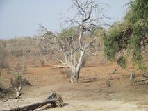 The amazing Chobe National Park. royalty free stock photos