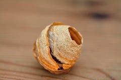 Amazing circular paperlike wasps nest. royalty free stock photo