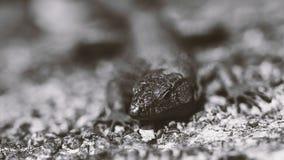 Amazing closeup lizard photo Royalty Free Stock Photo