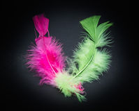 amazing closeup view of two fluffy colorful bird feathers Stock Photo