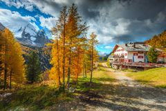 Yellow pine trees and high snowy mountains, Dolomites, Italy, Europe Royalty Free Stock Images