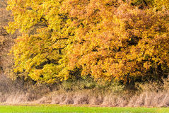 Amazing colorful autumn trees Stock Photos