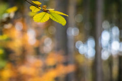 Amazing colorful blurred natural background with autumnal leaves Stock Images