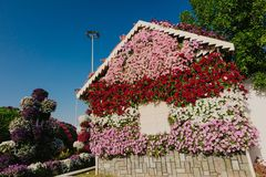 Amazing colorful houses of flowers in the Miracle Garden park, Dubai, United Arab Emirates stock photo