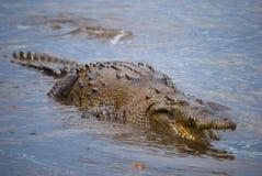 Big Crocodile in Island. Amazing crocodile in Coiba Island, taken on Panama in the Coiba Island his name Tito Crocodile Royalty Free Stock Photography