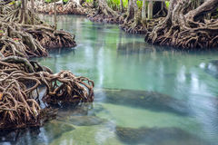 Amazing crystal clear emerald canal with mangrove forest Thapom. Amazing crystal clear emerald canal with mangrove forest Stock Photo