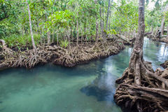 Amazing crystal clear emerald canal with mangrove forest Thapom. Amazing crystal clear emerald canal with mangrove forest Royalty Free Stock Image