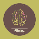 Amazing cute seamless vintage colorful herbs Stock Photos