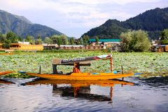 Shikata ride in Srinagar. Amazing Dal lake with houseboats and simple boats in Kashmir royalty free stock photos