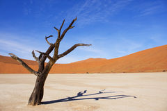 Amazing dead trees in beautiful desert. Royalty Free Stock Image