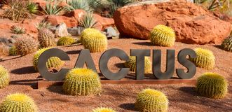 Amazing desert cactus garden with CACTUS sign. Amazing desert cactus garden with a large CACTUS sign royalty free stock image