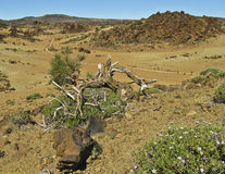 Amazing desert panorama with dry tree, landscape, stock images