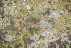 Amazing detailed  view of rock surface covered with fungi, lichen Stock Image