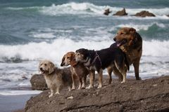 Amazing dogs in the beach stock photos