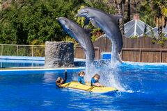 Amazing Dolphin show; trainer and kids in Palmitos park