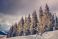 Amazing evening winter landscape Royalty Free Stock Images