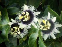 Amazing exotic flower. Beautiful exotic flower, Tenerife, Spain stock photos