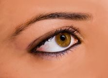 Amazing eye. Amazing brown eye with make-up Stock Photo