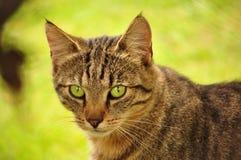 Amazing eyes cat in grass Stock Photo