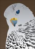 Amazing Falcon. Amazing white gray Falcon looking on camera vector illustration