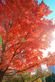 Amazing Fall Colors Royalty Free Stock Photography