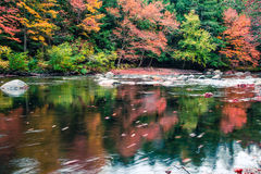 Amazing fall foliage along a river in New England Royalty Free Stock Images