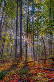 Amazing Fall Forrest. Lovely Nature Picture of an European Forest in Autumn Bavaria, Germany. Awesome Rays of Sun Stock Images