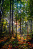 Amazing Fall Forrest. Lovely Nature Picture of an European Forest in Autumn Bavaria, Germany. Awesome Rays of Sun Stock Image