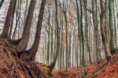 Amazing Fall Forrest. Lovely Nature Picture of an European Forest in Autumn Bavaria, Germany. Spooky and Creepy Atmosphere Royalty Free Stock Photography
