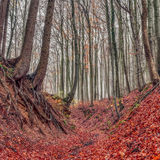 Amazing Fall Forrest. Lovely Nature Picture of an European Forest in Autumn Bavaria, Germany. Spooky and Creepy Atmosphere Royalty Free Stock Images
